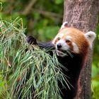 Bambus zum Frühstück