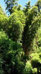 Bambusgarten im Schloss
