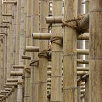 bambusgerüst