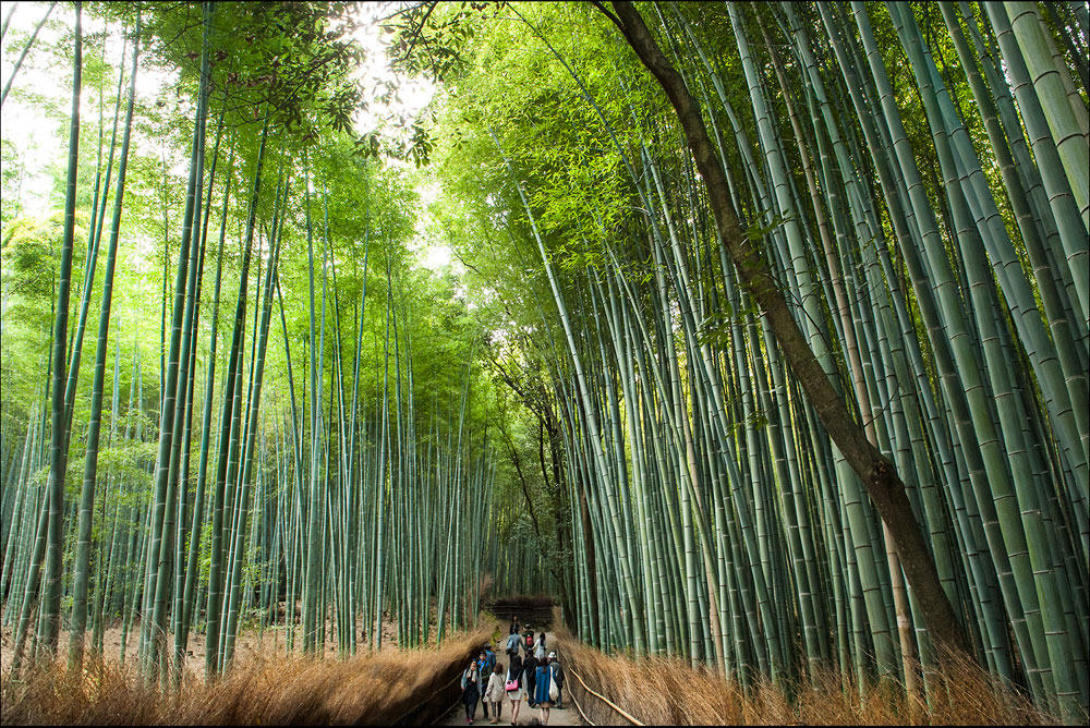 Bambushain-10