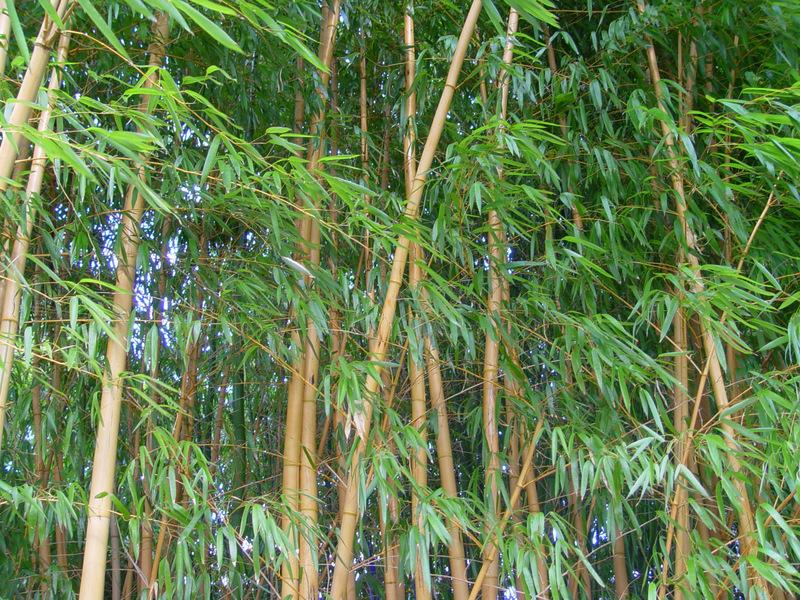 Bambuswald Foto Bild Natur Kreativ Natur Bilder Auf Fotocommunity