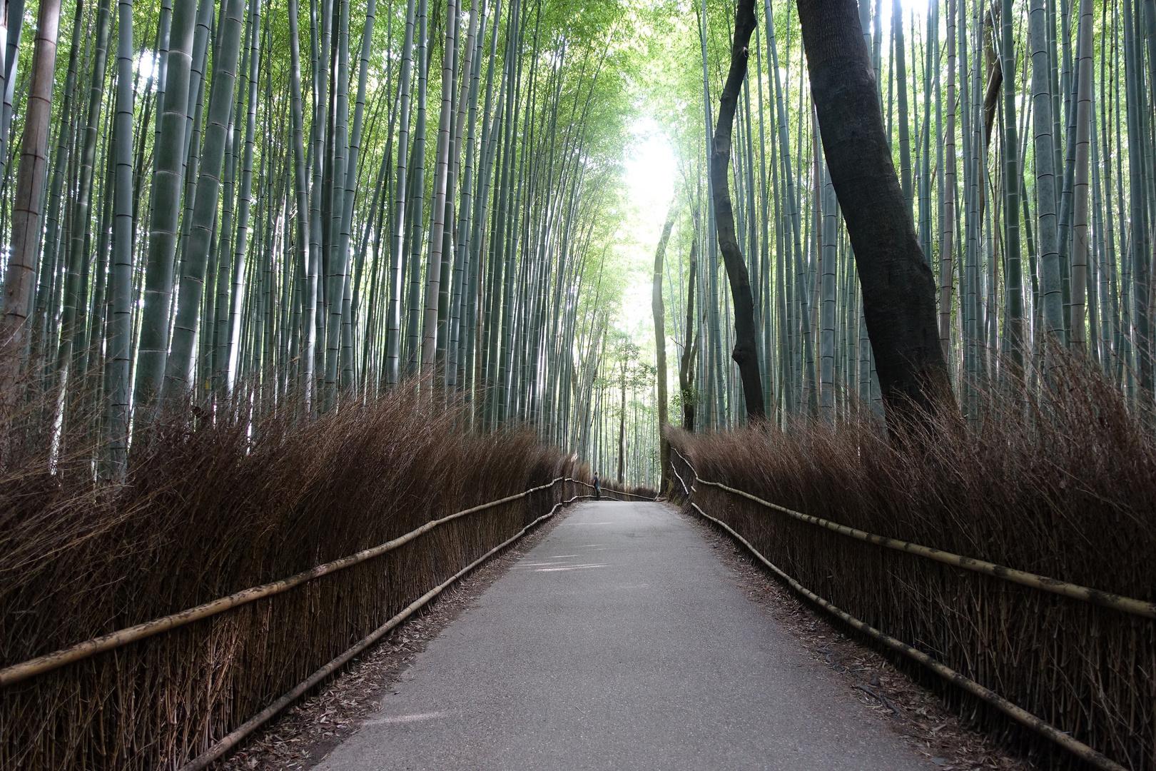 Bambuswald Arashiyama Bei Kyoto Foto Bild Japan Asia Kyoto