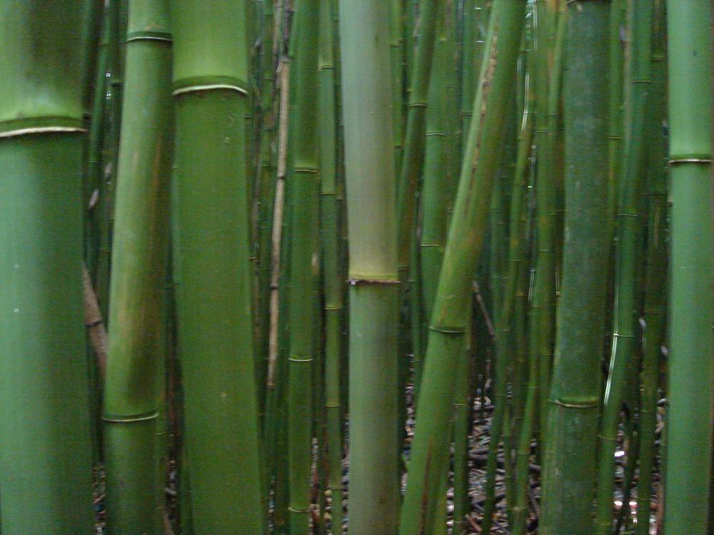 Bambuswald Auf Maui Foto Bild Natur Kreativ Natur Bilder Auf