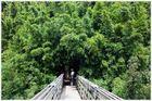 Bambuszauber auf Maui