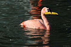 banana flamingo