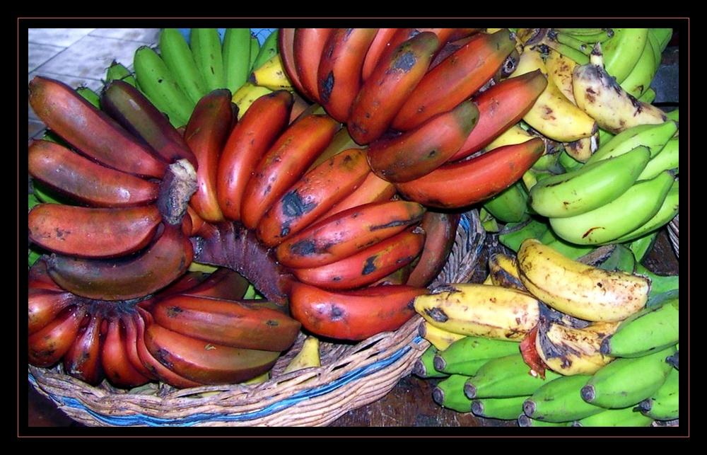 bananas of all kinds