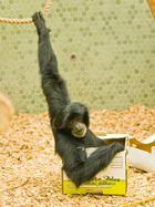 Bananen-Express... bitte festhalten!