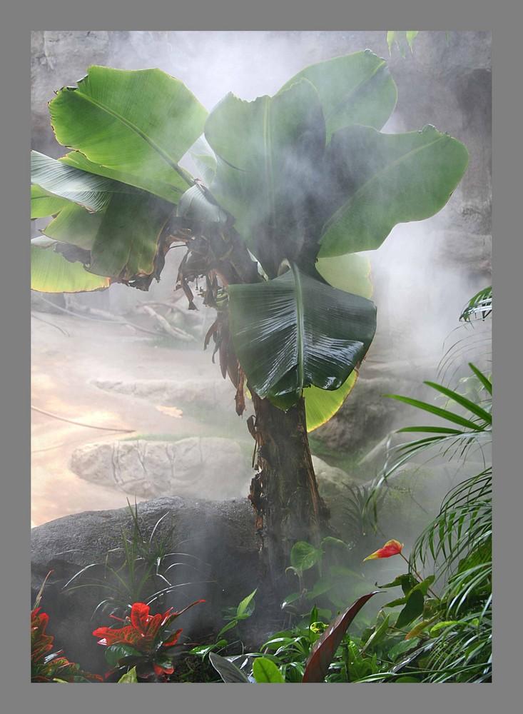 Bananenbaum von Simone Wunderlich