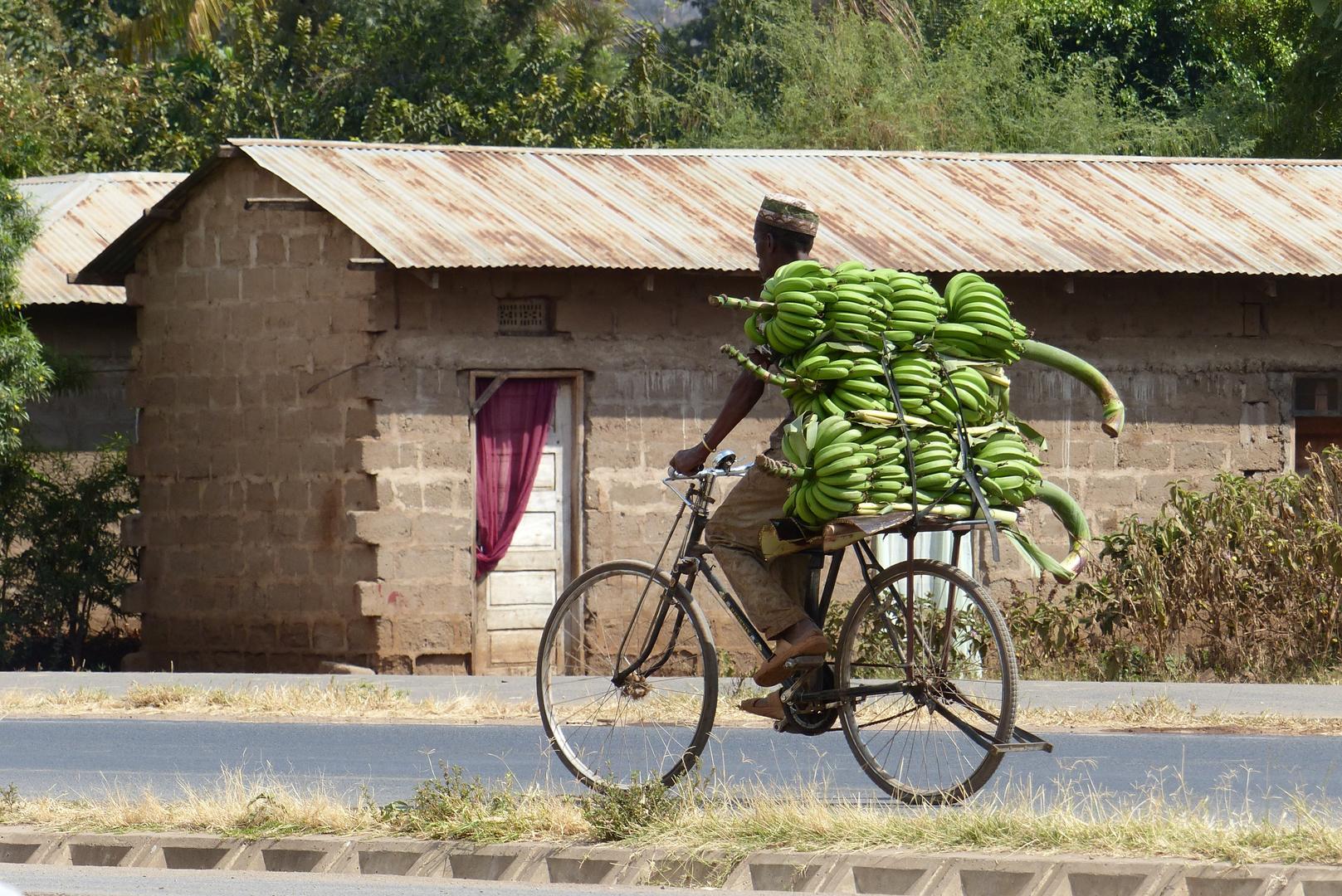 Bananenernte in Tansania
