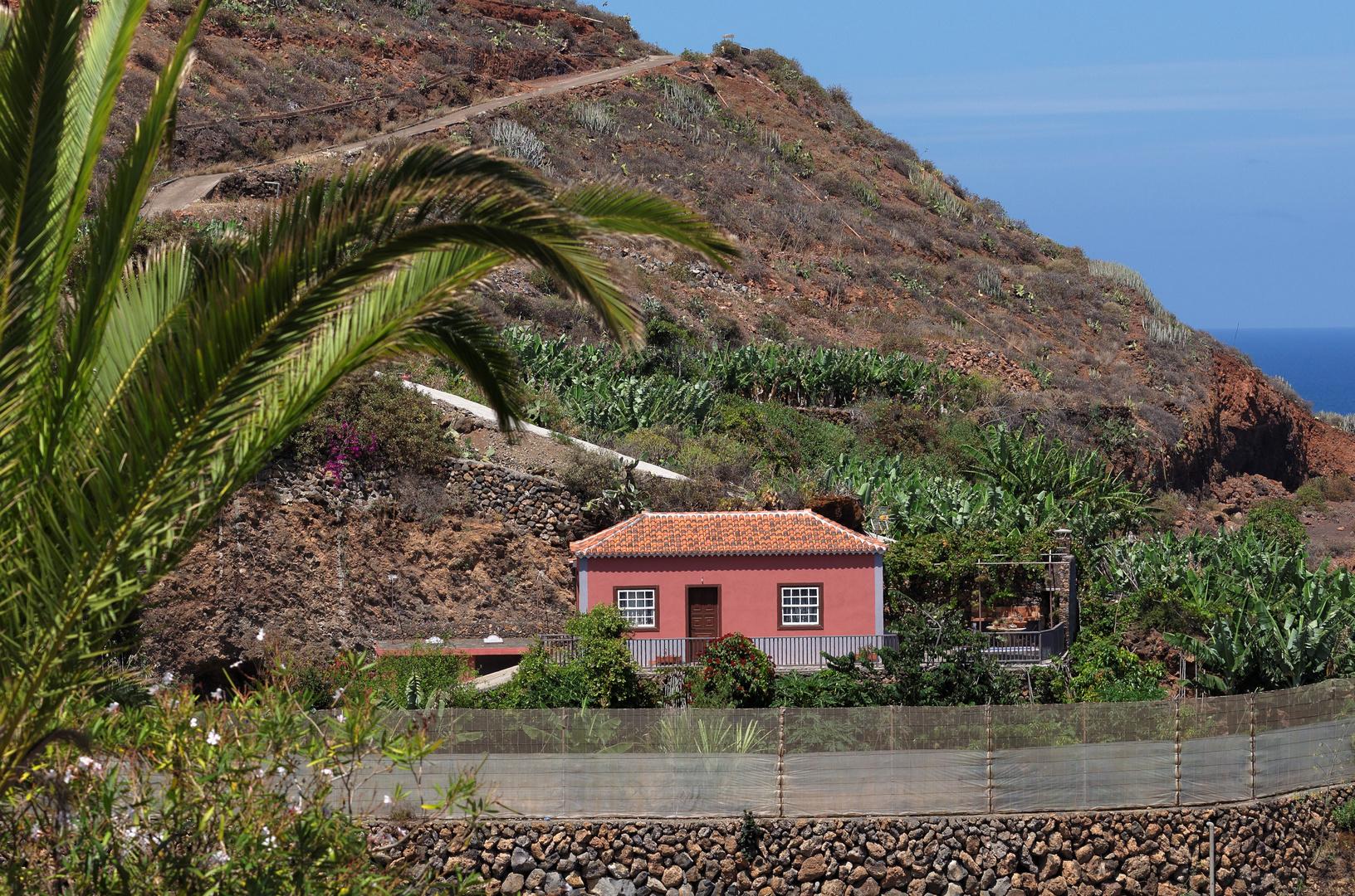 Bananenplantage, Nähe La Fajana, La Palma, September 2013