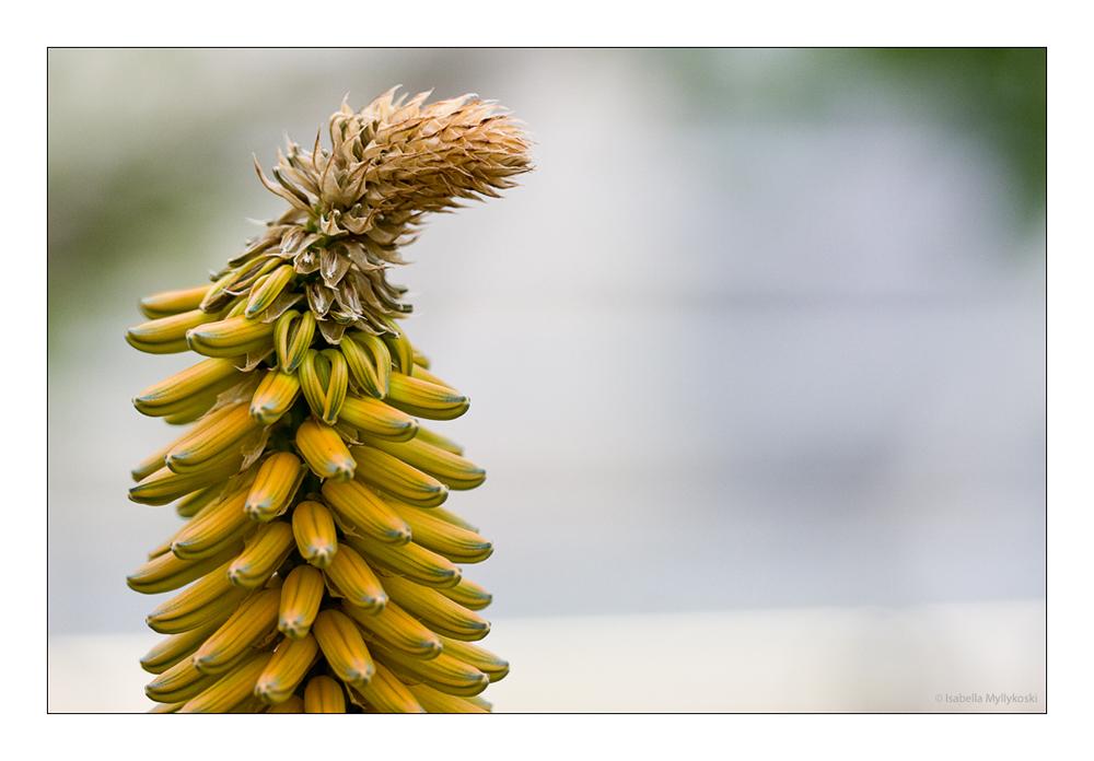 Bananenturm