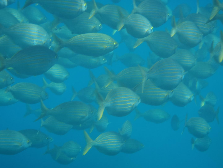 banc de poissons 2