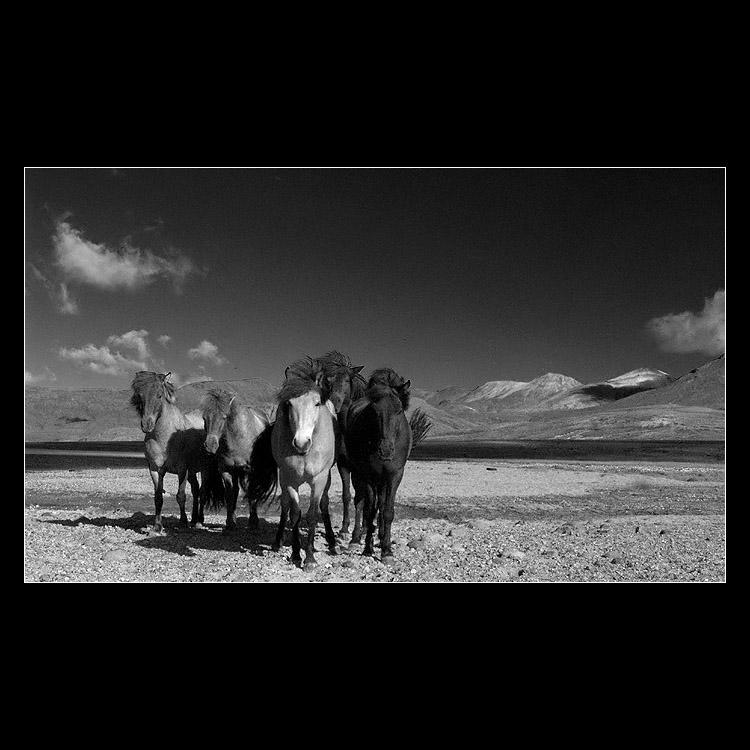 ...band of horses...