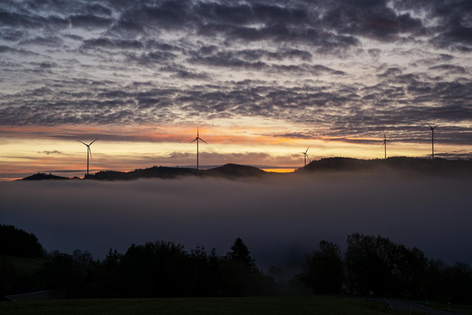 Banfe unterm Nebel