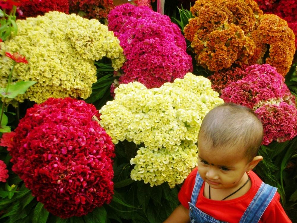 Bangalore Flower Show 2007