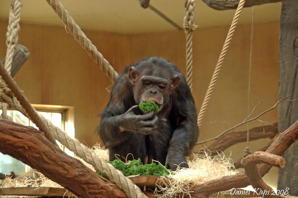 Banghi beim Mittag