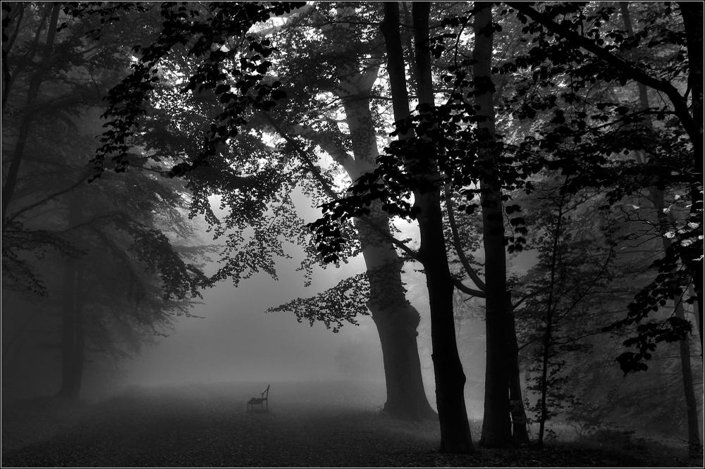 Bank im Nebel