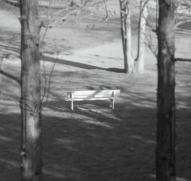 """Bank """"zwischen den Bäumen""""  im Focus"""