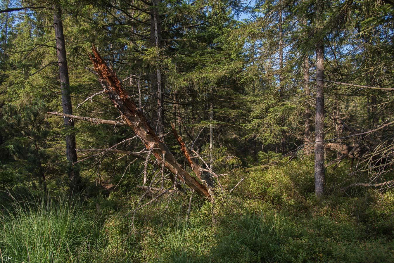 Bannwald Wildseemoor