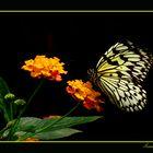 Banquete Floral
