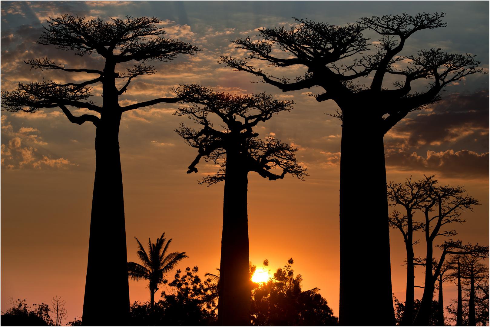 [ Baobab Alley...]