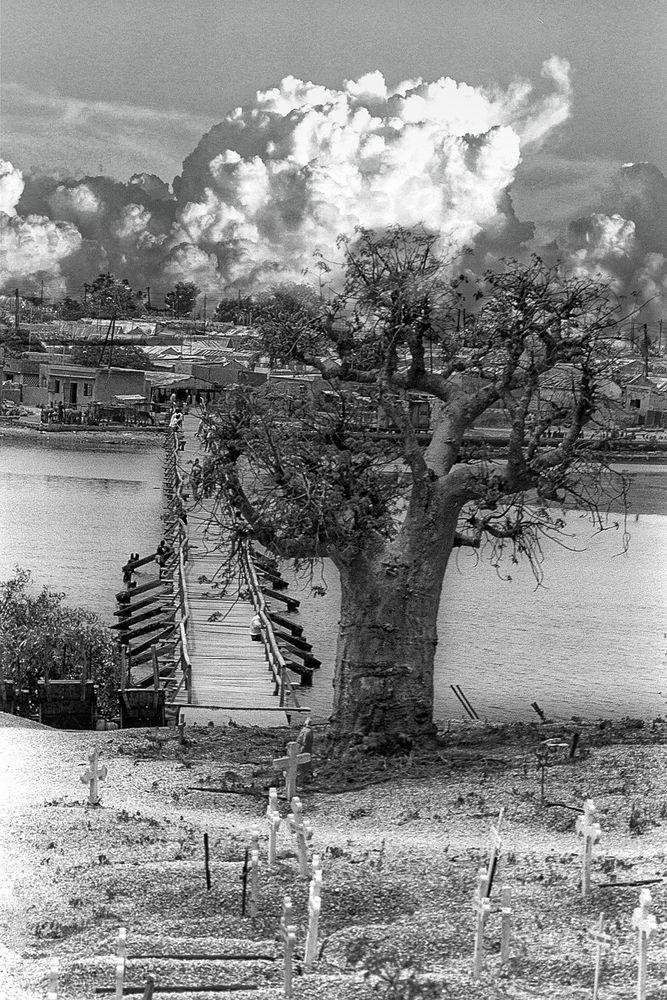 Baobab bridge