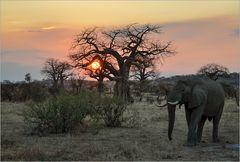 Baobab Sunset...