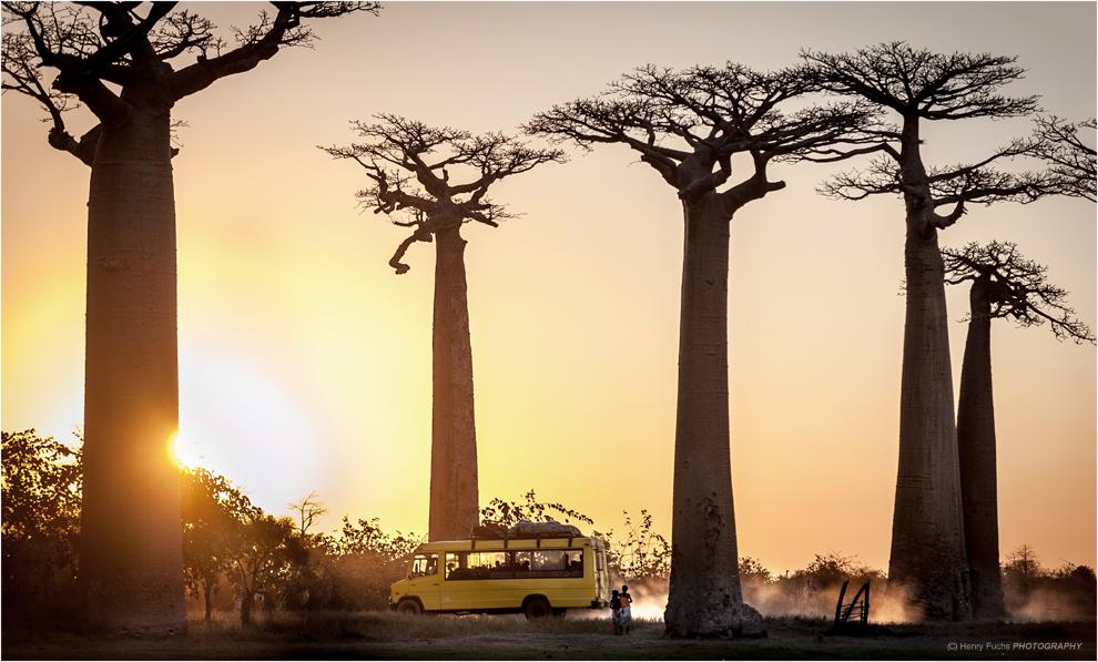 Baobab Tales...