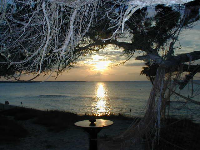 "Bar El Tiburon Formentera (""bei Arnold"")"
