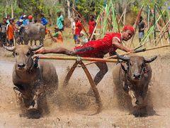 Barapan Kebo - Akrobatik pur