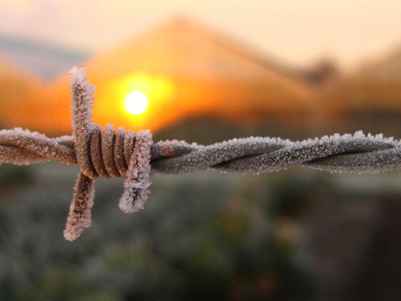 barbed frost