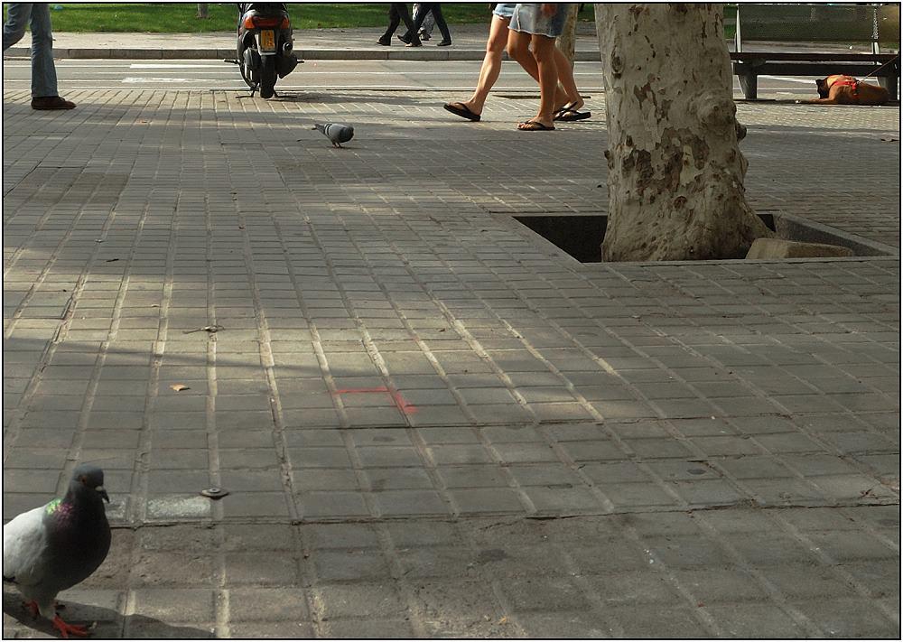 ... Barceloneta-Flair ...