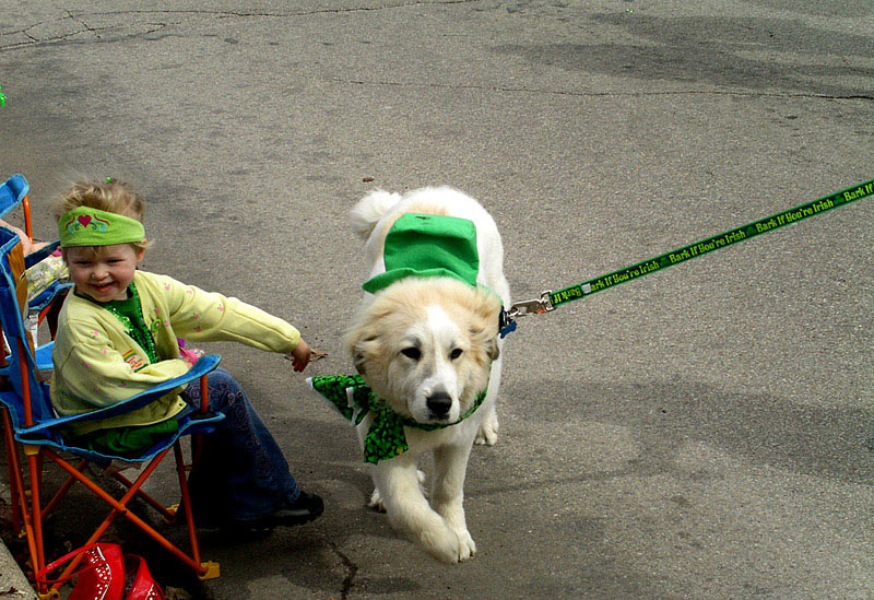 Bark if You're Irish