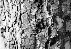 Bark - Rinde
