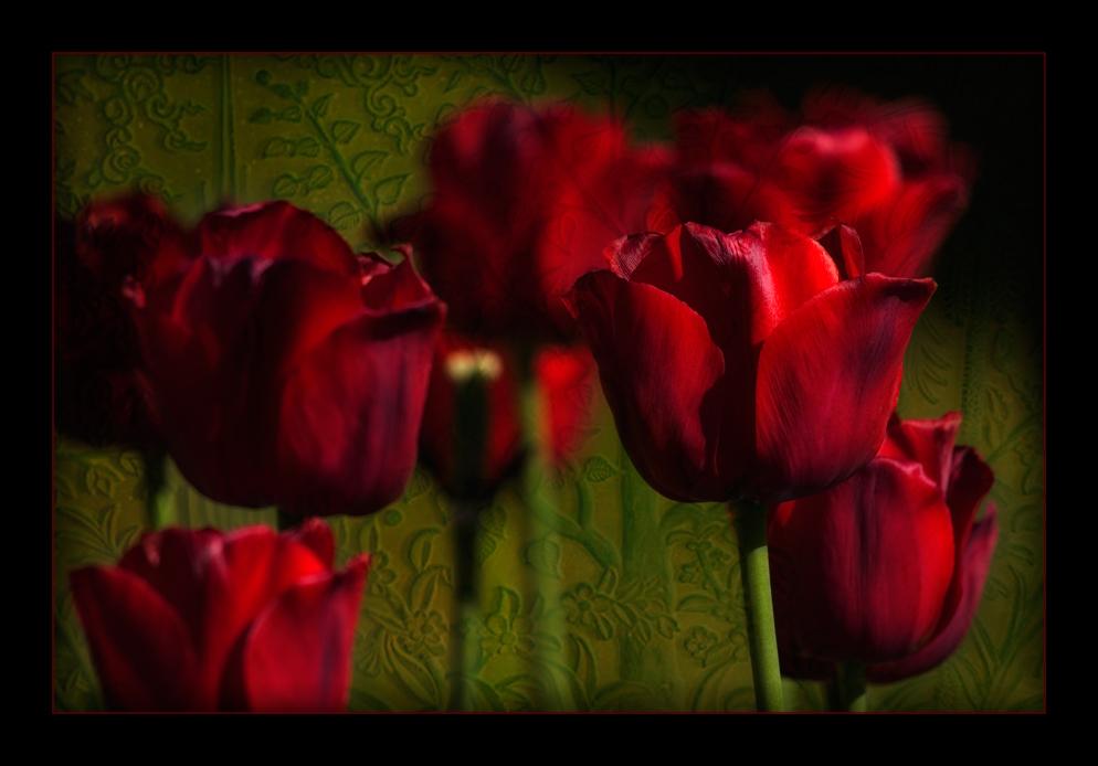 barocke Tulpen