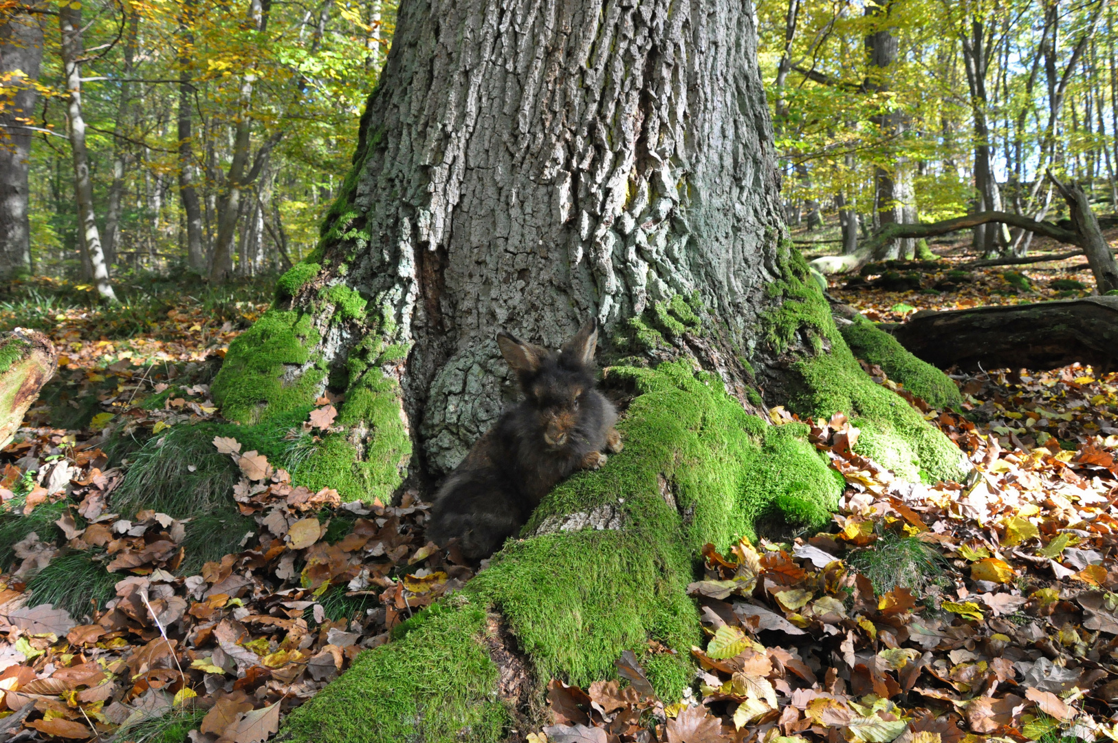 Bartkaninchen 24: Wald