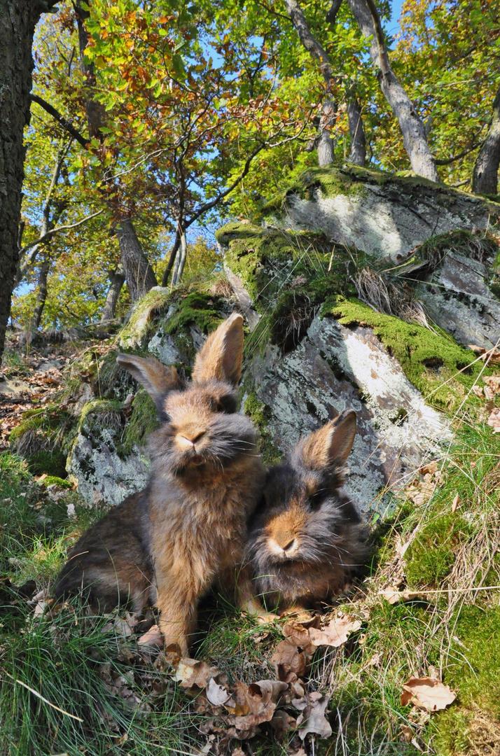 Bartkaninchen 29: Wald