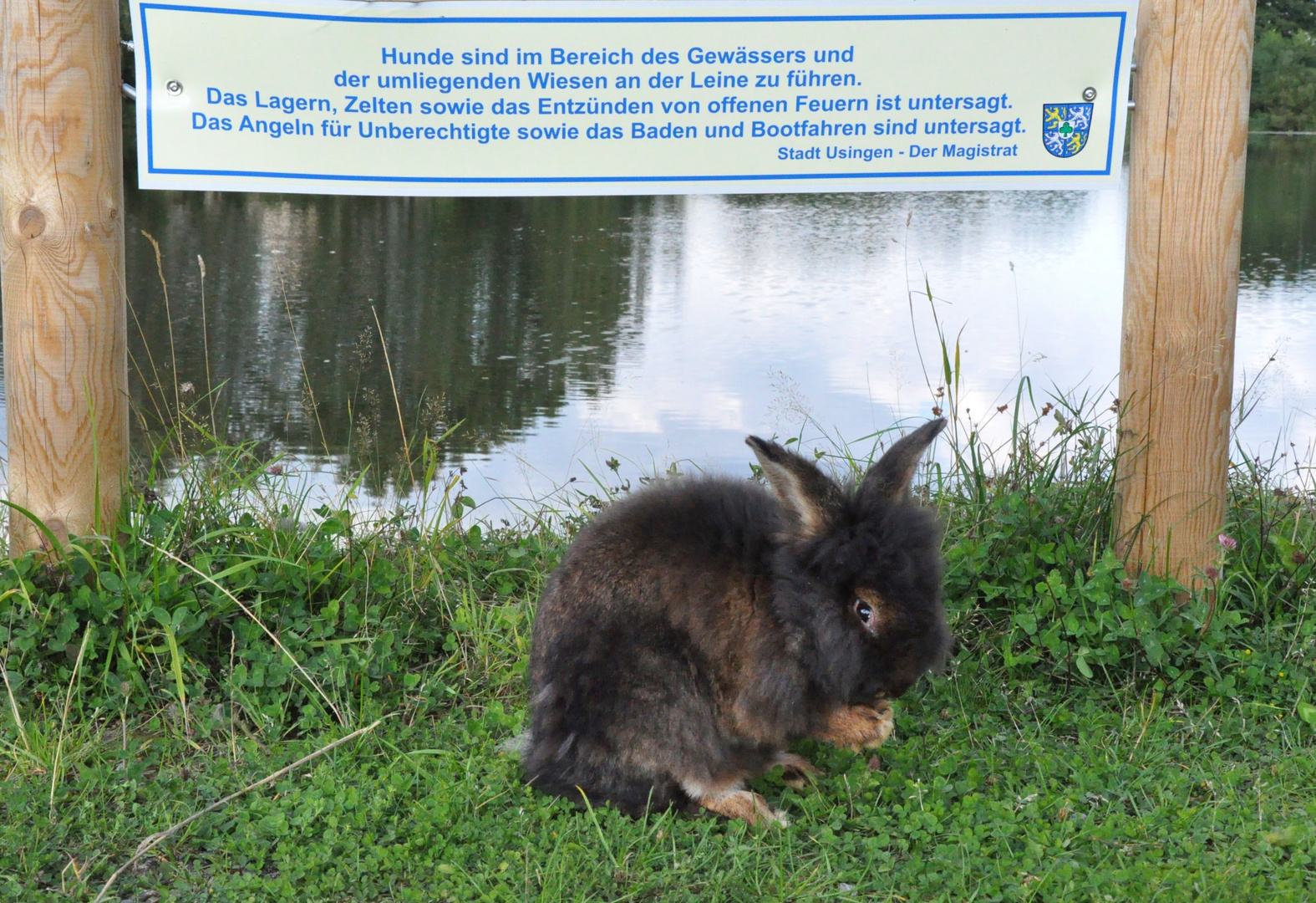 Bartkaninchen 30: gilt das auch für Kaninchen