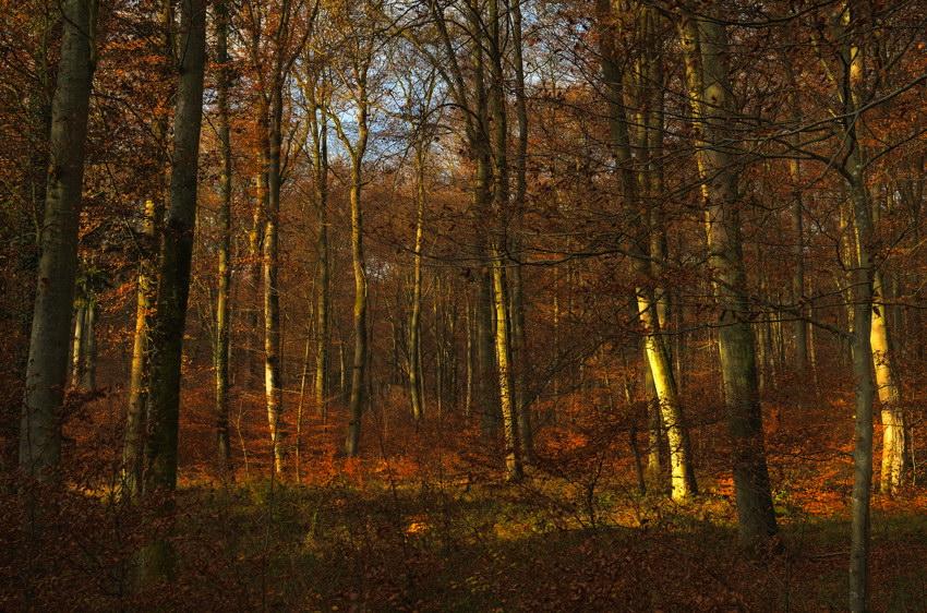 Bartrenger Wald
