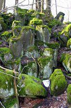 Basaltsäulen auf der Sachsenburg bei Oberalba Rhön - 2