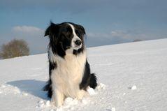 Basco im Schnee