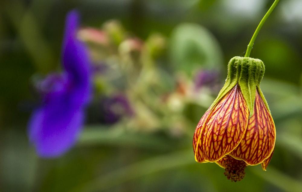Basel - Botanischer Garten 02