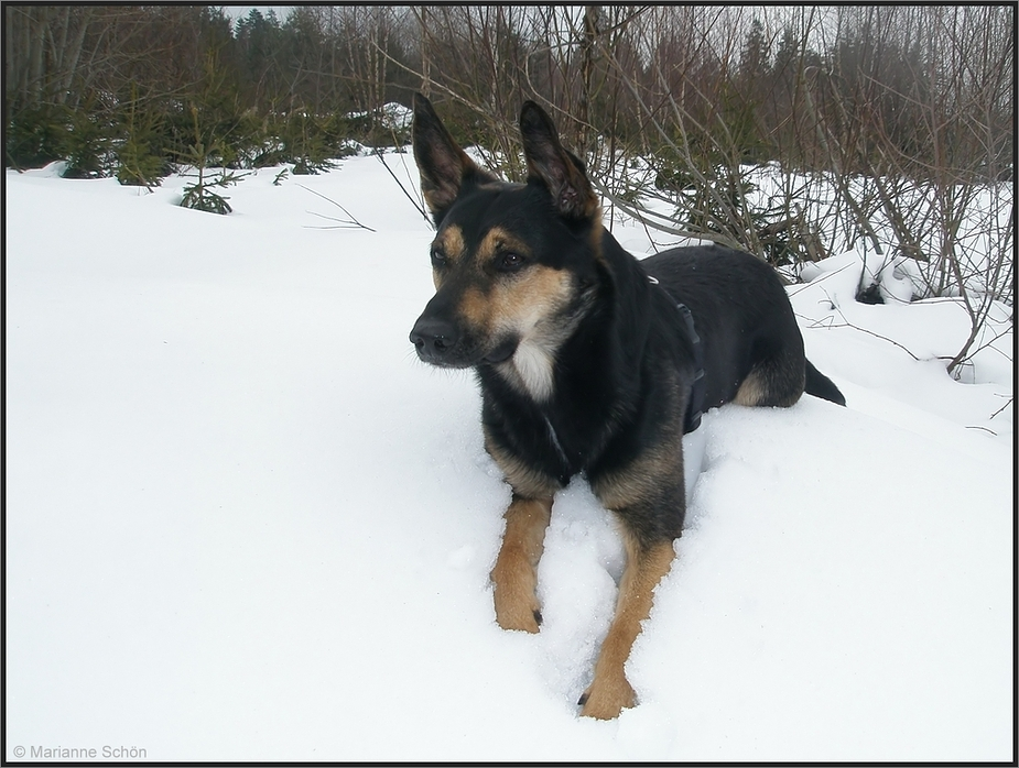 Basko im Schnee...