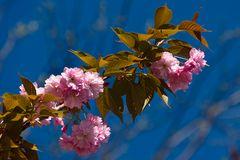 Basler Frühling 9