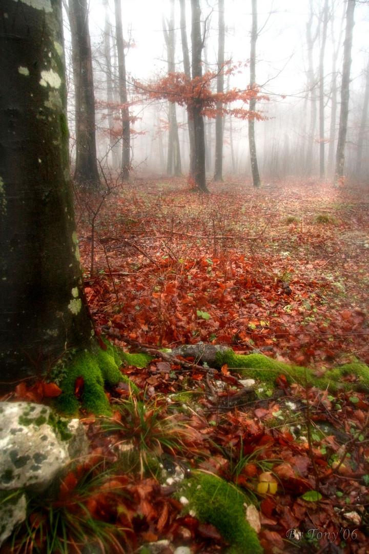 Basta nebbia ...