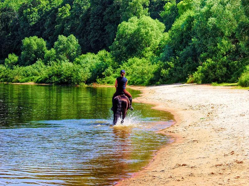 Bathing of a horse on the river