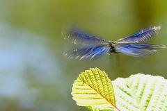 battements d'ailes