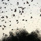 Battiti d'ali