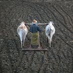 Bauer beim Pflügen
