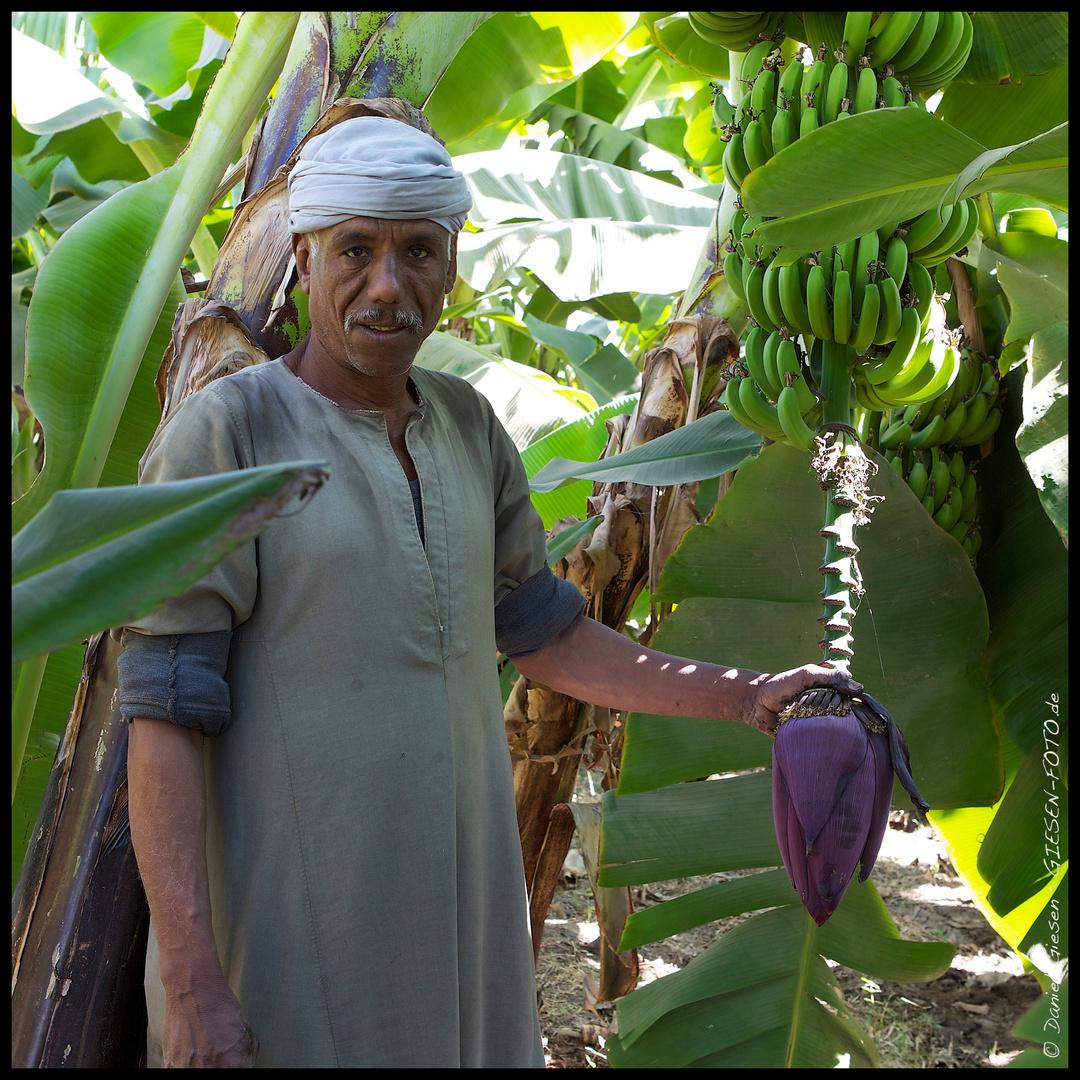 Bauer einer Bananenplantage, Luxor/Ägypten 2011